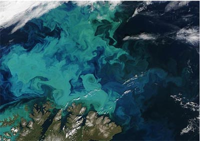 phytoplankton off norway